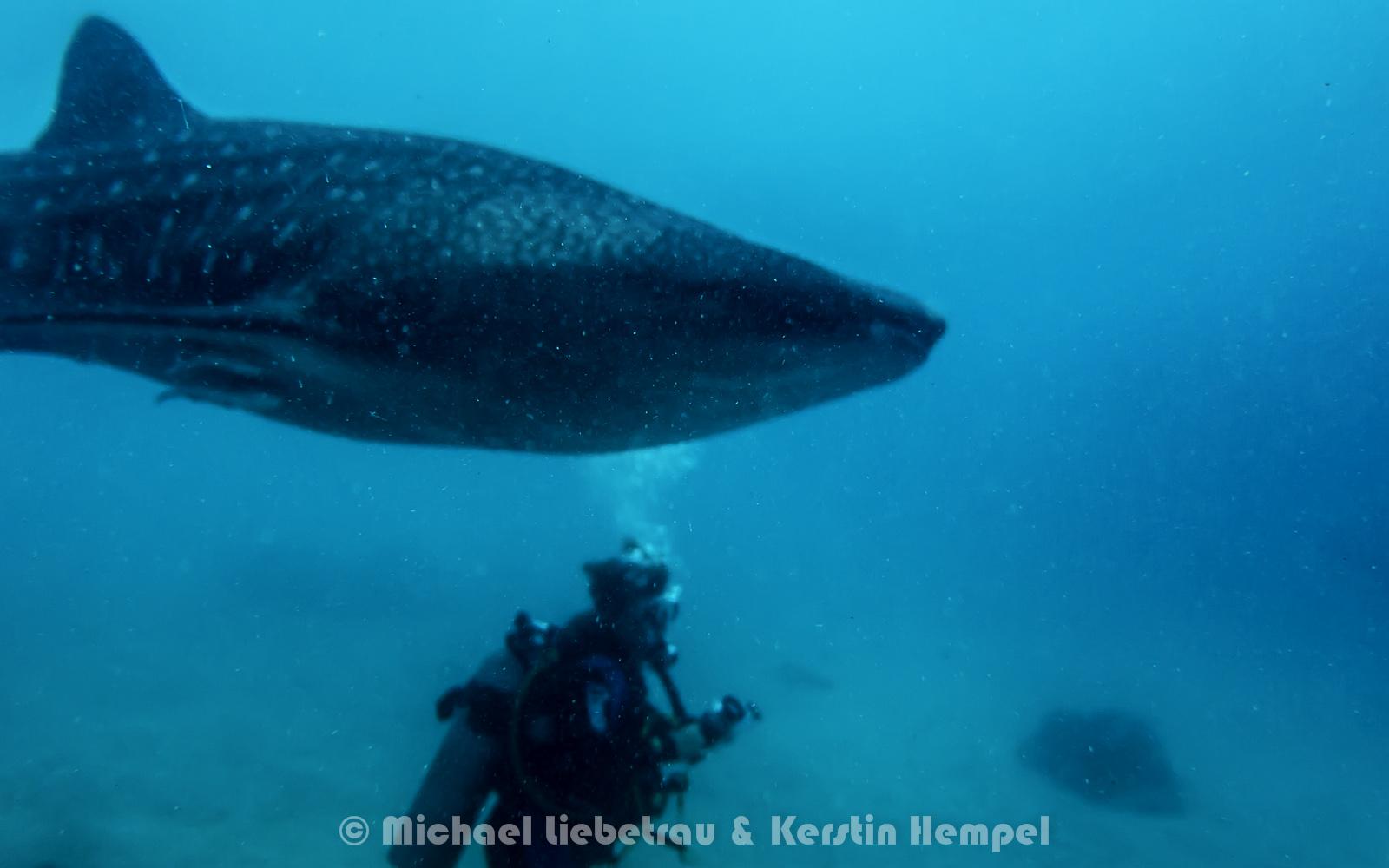 Die Giganten der Ozeane